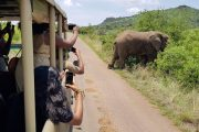 Dzedze Travel and Tours Wildlife Toour